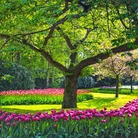 Red tulip garden or field in spring background, pattern or texture 스톡 콘텐츠