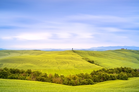 Tuscany country landscape, cypress tree and green fields San\ Quirico Orcia, Italy, Europe Long exposure photography