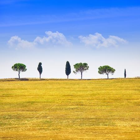 투스카니 국가 풍경, 사이프러스 나무와 그린 필드 산 퀴리 코 시아, 이탈리아, 유럽