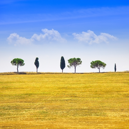 Tuscany country landscape, cypress trees and green fields  San Quirico Orcia, Italy, Europe  Stock Photo