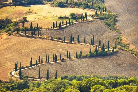 val dorcia: Cypress tree scenic road in Pienza near Siena, Tuscany, Italy, Europe
