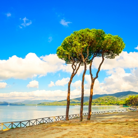 pinaceae: Pine tree group on the beach and sea bay background  Punta Ala, Tuscany, Italy Stock Photo
