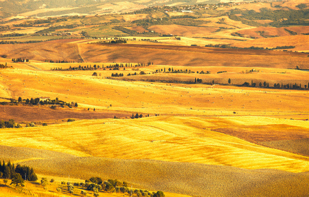 rolling: Pienza Val d Orcia, rural sunset landscape  Countryside farm and green fields  Tuscany, Italy, Europe