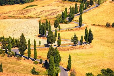 monticchiello: Cypress tree scenic road in Monticchiello near Siena, Tuscany, Italy, Europe