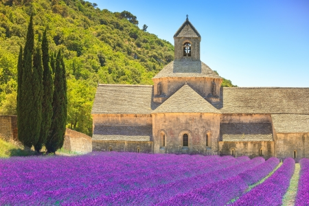 abbaye: blooming rows lavender flowers with a church in France