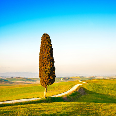 cypress tree: Tuscany, lonely cypress tree and white rural road on sunset  Siena, Orcia Valley, Italy, Europe
