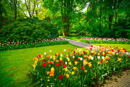 Garden in Keukenhof, tulip flowers and trees on background in spring  Netherlands, Europe