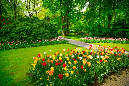 tulipan: Ogród w Keukenhof, tulipan kwiaty i drzewa na tle wiosną Holandii, Europie