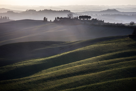 siena italy: Tuscany, rolling hills on sunset  Crete Senesi rural landscape and sunlight  Green fields, a farm with trees  Siena, Italy
