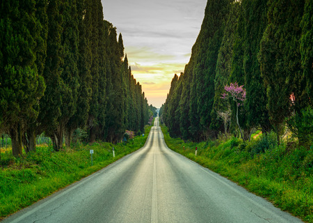 Bolgheri famous cypresses trees straight boulevard landscape Maremma landmark, Tuscany, Italy, Europe This boulevard is famous for Carducci poem