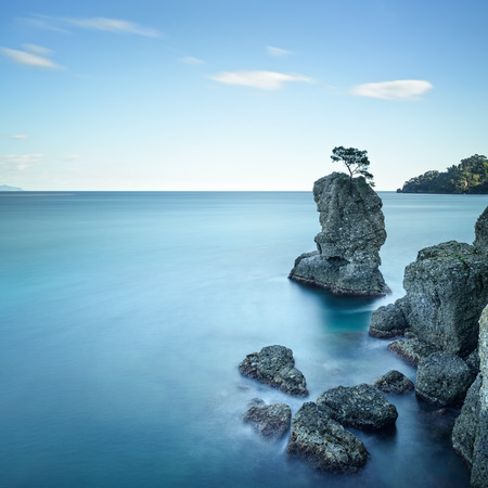 Portofino natural regional park  Lonely pine tree rock and coastal cliff beach  Long exposure photography  Liguria, Italy photo