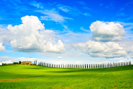 val: Tuscany, farmland, cypress trees row and plowed field, country landscape  Siena, Val d Orcia, Italy, Europe