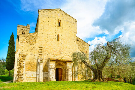 Sant Antimo, Castelnuovo Abate Montalcino church and secular olive tree  Val d Orcia Tuscany, Italy, Europe photo