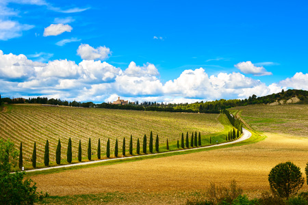 Vineyard, cypress Trees rows and road in a rural landscape in val d Orcia land near Siena, Tuscany, Italy, Europe  photo