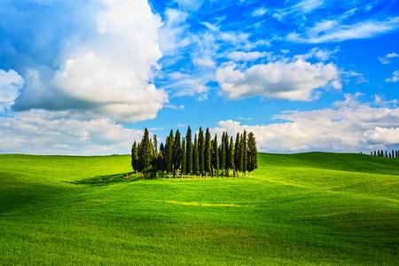 Groupe Cypress et roulement champ paysage rural dans la vallée d'Orcia, San Quirico, Sienne, en Toscane Italie