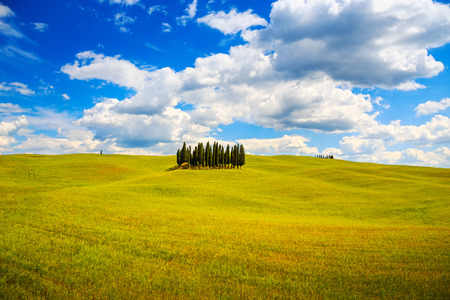 siena italy: Cypress group and rolling field rural landscape in Orcia valley, San Quirico, Siena, Tuscany  Italy