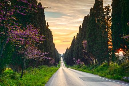 Bolgheri beroemde cipressen bomen rechtdoor boulevard landschap. Maremma bezienswaardigheid, Toscane, Italië, Europa. Deze boulevard is beroemd om Carducci gedicht. Stockfoto