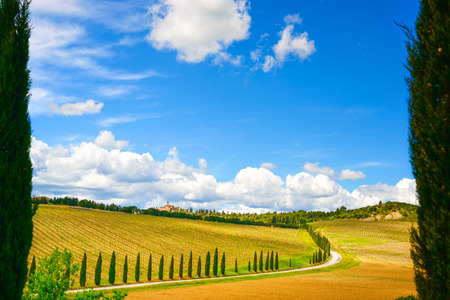 Vineyard, cypress Trees rows and road in a rural landscape in val d Orcia land near Siena, Tuscany, Italy, Europe. photo