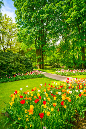 Garden in Keukenhof, tulip flowers and trees on background in spring. Netherlands, Europe. Stock Photo
