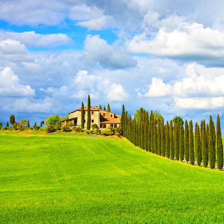 toscana: Tuscany, farmland, cypress trees row and plowed field, country landscape. Siena, Val d Orcia, Italy, Europe.