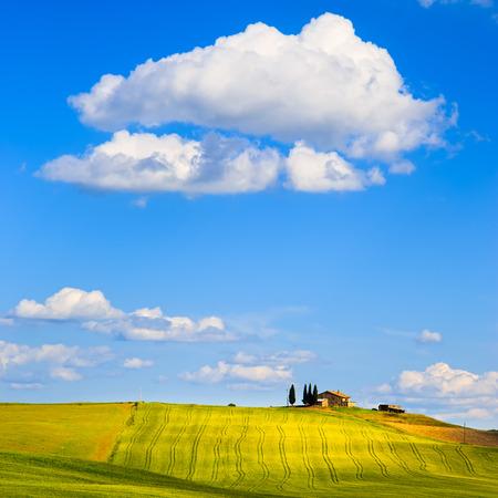 Tuscany, farmland and cypress trees country landscape, green fields. Pienza, Italy, Europe. Standard-Bild