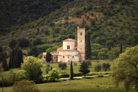 antimo: Sant Antimo, Castelnuovo Abate Montalcino church and secular olive tree. Val d Orcia Tuscany, Italy, Europe