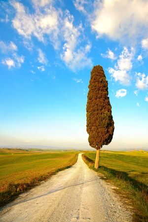 orcia: Tuscany, lonely cypress tree and white rural road on sunset. Siena, Orcia Valley, Italy, Europe.