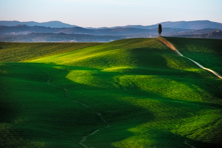 val d      orcia: Tuscany country rolling hills landscape, hilltop cypress tree and green fields on sunset. Siena, Val d Orcia Italy, Europe.