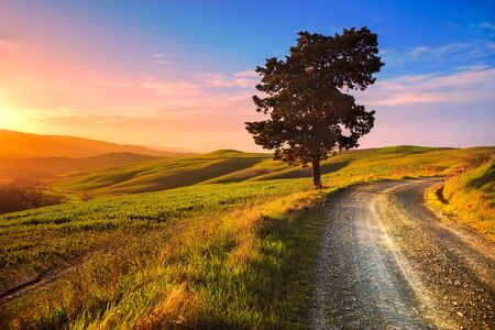 lonely road: Tuscany lonely tree and white rural road on sunset. Volterra Italy Europe.