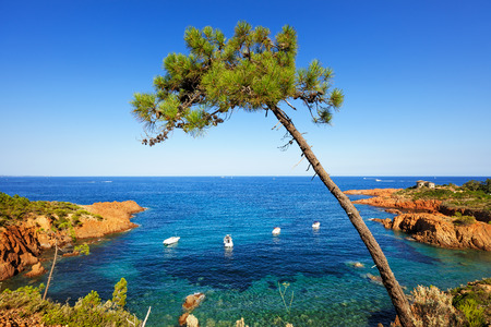 azure coast: Esterel mediterranean tree, red rocks coast, beach and sea. French Riviera in Cote d Azur near Cannes, Provence, France, Europe. Stock Photo