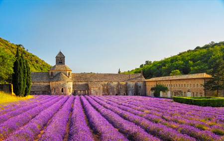 europe: Abbey of Senanque and blooming rows lavender flowers on sunset. Gordes, Luberon, Vaucluse, Provence, France, Europe.