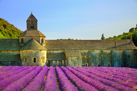 abbaye: Abbey of Senanque and blooming rows lavender flowers on sunset. Gordes, Luberon, Vaucluse, Provence, France, Europe.