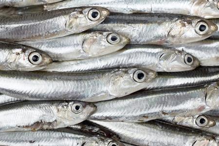 peces: Anchoas frescas preparados textura o patrón de fondo del mar. Alimentos crudos. Foto de archivo
