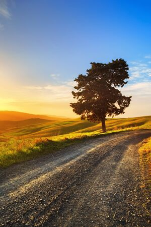 lonely road: Tuscany, lonely tree and white rural road on sunset. Volterra, Italy, Europe.
