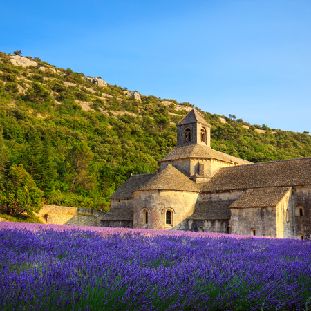 field: Abbey of Senanque and blooming rows lavender flowers on sunset. Gordes, Luberon, Vaucluse, Provence, France, Europe.