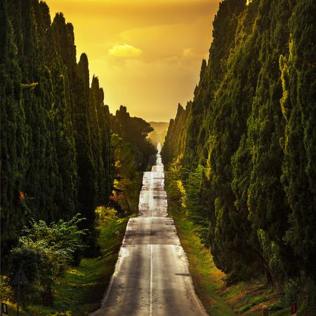 Bolgheri famous cypresses trees straight boulevard landscape. Maremma landmark, Tuscany, Italy, Europe. This boulevard is famous for Carducci poem.