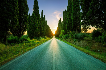 poem: Bolgheri famous cypresses trees straight boulevard on backlight sunset landscape. Maremma landmark, Tuscany, Italy, Europe. This boulevard is famous for Carducci poem.