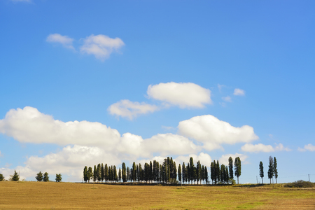 chianti: Cypress Trees rows on hill top, rural landscape in Chianti land near Florence. Tuscany, Italy, Europe.
