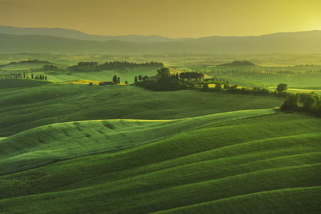 green field: Tuscany spring, rolling hills on misty sunset. Rural landscape. Green fields and farmlands. Italy, Europe