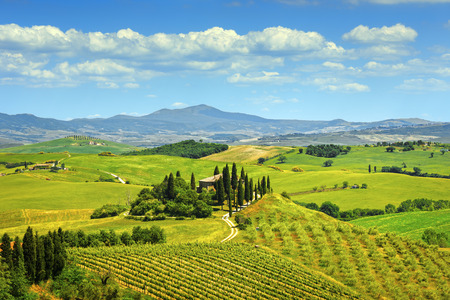 cypress tree: Tuscany, farmland and cypress trees country landscape, green fields. Italy, Europe. Stock Photo
