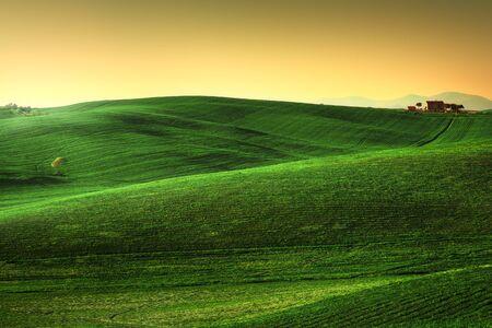토스카 봄, 일몰 언덕. 시골 풍경입니다. 그린 필드, 외로운 올리브 나무와 농지. 테라 이탈리아, 유럽 스톡 콘텐츠