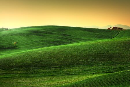 Tuscany spring, rolling hills on sunset. Rural landscape. Green fields, lonely olive tree and farmlands. Volterra Italy, Europe Standard-Bild