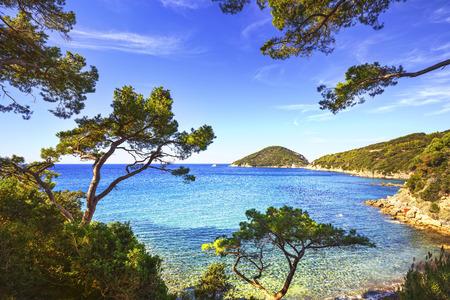 Eiland Elba zee, Portoferraio Viticcio kust en mediterrane pijnbomen Toscane, Italië, Europa. Stockfoto