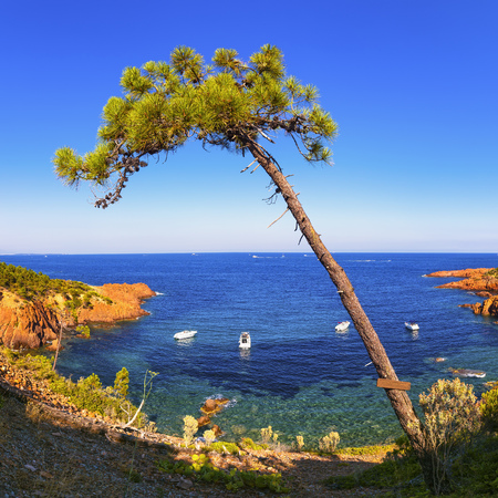 provencal: Esterel mediterranean tree, red rocks coast, beach and sea. French Riviera in Cote d Azur near Cannes, Provence, France, Europe. Stock Photo