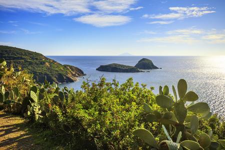 islets: Elba island, cactus indian fig opuntia, Innamorata beach and Gemini islets view Capoliveri Tuscany, Italy, Europe.