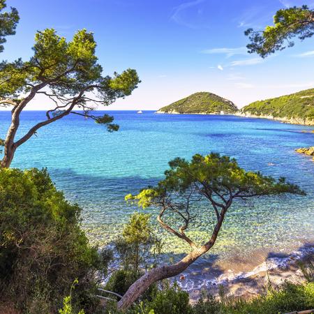 ocean and sea: Elba island sea, Portoferraio Viticcio beach coast and mediterranean pine trees Tuscany, Italy, Europe. Stock Photo