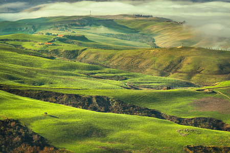 Tuscany foggy morning, farmland and green fields country landscape. Volterra Italy, Europe.