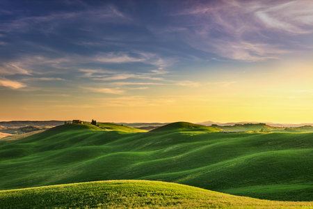 cypress tree: Tuscany, rural landscape in Crete Senesi land. Rolling hills, countryside farm, cypresses trees, green field on warm sunset. Siena, Italy, Europe.