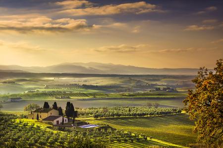 Maremma Toscana niebla por la mañana, tierras de cultivo y campos verdes del paisaje del país. Italia, Europa.