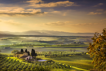 olive farm: Tuscany Maremma foggy morning, farmland and green fields country landscape. Italy, Europe. Stock Photo
